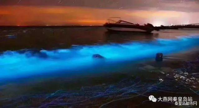 """传说中美到尖叫的""""荧光海""""又在秦皇岛出现啦"""