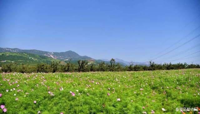 在秦皇岛神秘的北纬40度 藏着一处大型郊野公园